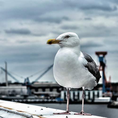MCN - der Interessensvaenrband für die maritime Wirtschaft